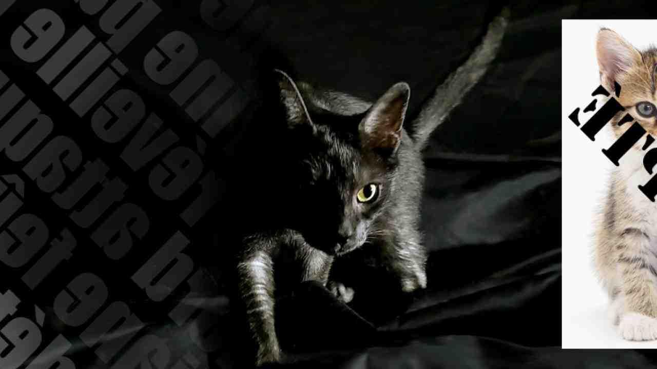 Comment trouver un chaton à donner ?