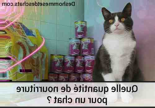 Est-ce que avoir un chat coûte chère ?