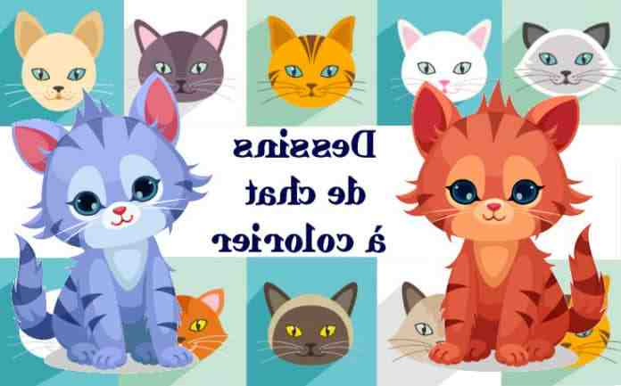 Où trouver des chatons à adopter ?