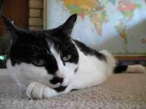 Quand faire le premier vaccin d'un chaton ?