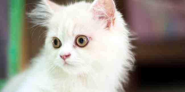 Quel budget par mois pour un chat ?