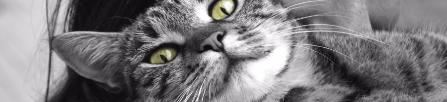 Quel coût pour un chat ?