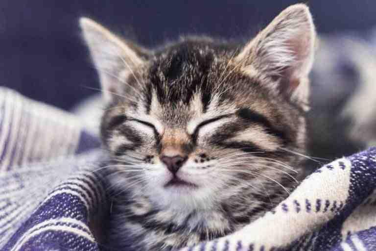 Quel est le prix d'un petit chaton ?