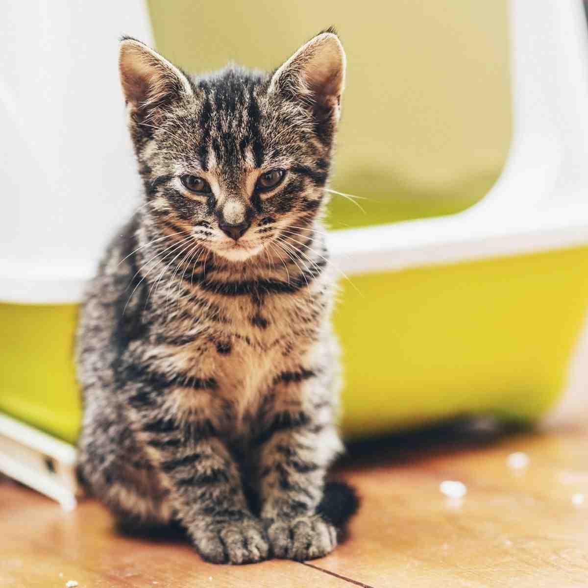 Quel prix pour vacciner un chaton ?